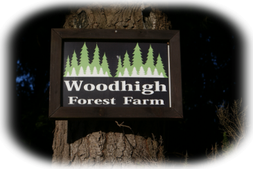 Woodhigh Forest Farm Holiday accomodation & adventure Rotarian managememt